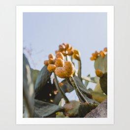 Cactus Fruit Plant | Fine Art Travel Photography | Nature Art | Cactus Fine Art | Cactus fruit Print Art Print
