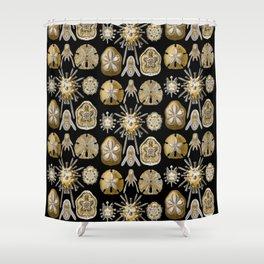 Ernst Haeckel - Scientific Illustration - Echinidea (Sea Urchins) Shower Curtain