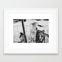 goat Framed Art Prints featuring Goat by Leah Flores