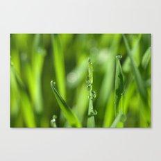 Morning dew 8548 Canvas Print