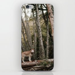 Husky in Forest iPhone Skin