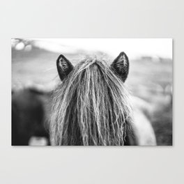 Wild Horse no. 1 Canvas Print