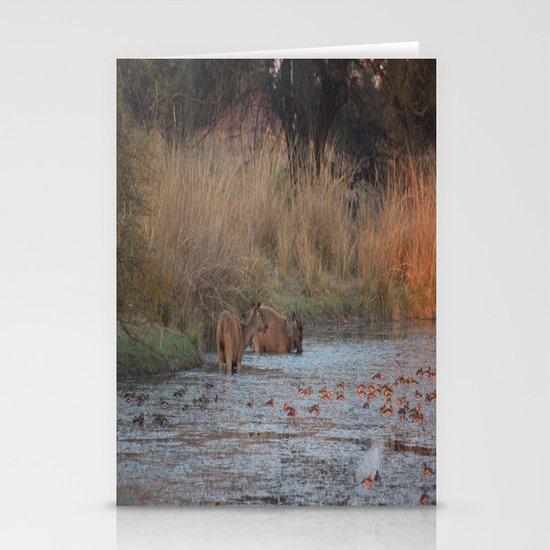 Wildlife Bathtube Time Stationery Cards