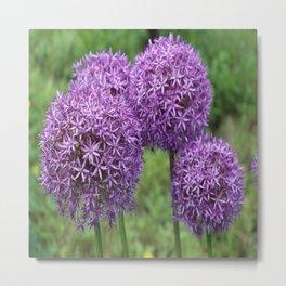Three Allium Flowers Metal Print