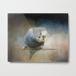 The Budgie Collection - Budgie 3 Metal Print