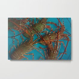 Lobster Metal Print