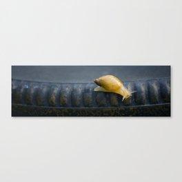 Calla the Snail by Althéa Photo Canvas Print