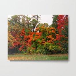 Flamboyant Forest Metal Print