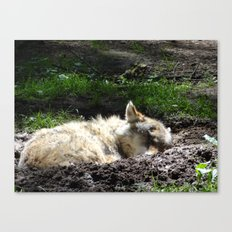 Let Sleeping Wolf Sleep Canvas Print
