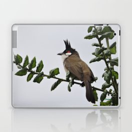 Red-Whiskered Bulbul Laptop & iPad Skin