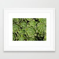succulent Framed Art Prints featuring Succulent by Cynthia del Rio