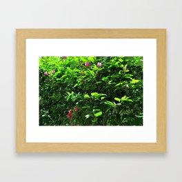 Bugambilia Scene Framed Art Print