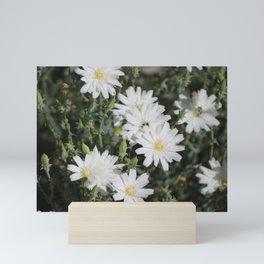 Desert Chicory Coachella Wildlife Preserve 2 Mini Art Print