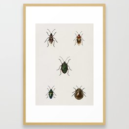 Different types of insects illustrated by Charles Dessalines D' Orbigny (1806-1876) Framed Art Print