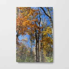 Fall Nips Metal Print