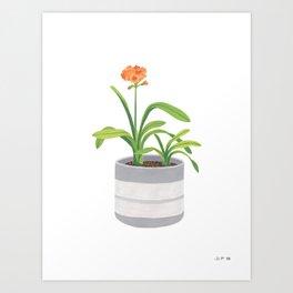 Clivia miniata Art Print