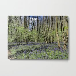 Everdon Stubbs Wood Bluebells Metal Print