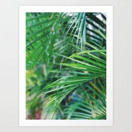 Palm Fever Art Print
