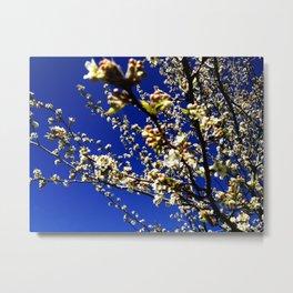 Spring Blossom Sky Metal Print