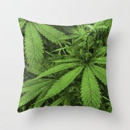 Marijuana Plants Photo Throw Pillow