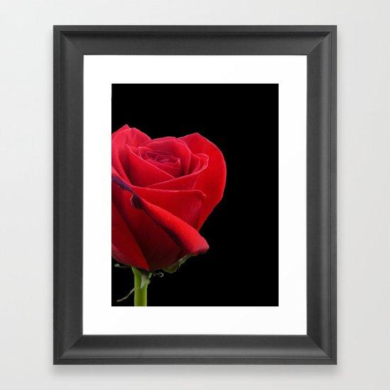 ROSE ON BLACK Framed Art Print