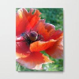 Tattered Poppy Metal Print