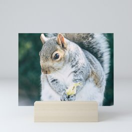 Squirrely Snacks Mini Art Print