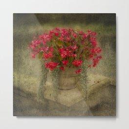 Begonia flowers Metal Print