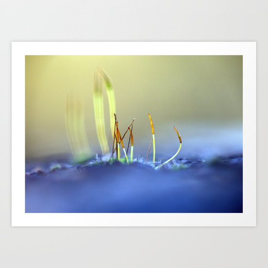 Capillary thread-moss 305 Art Print