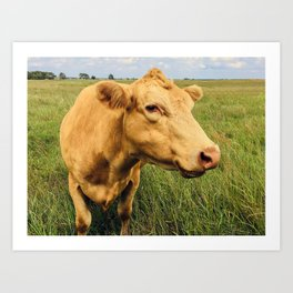 Blonde Cow Art Print