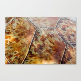 Sea Turtle Scutes Canvas Print