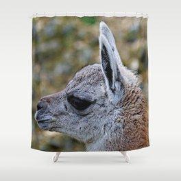 cute young Guanaco Shower Curtain