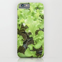 Lettuce Hydroponic farm, Lettuce Sprouts, Green Young Lettuce Plants iPhone Case