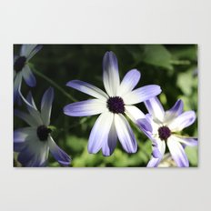 Oh the ombre Canvas Print