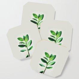 Ficus Coaster