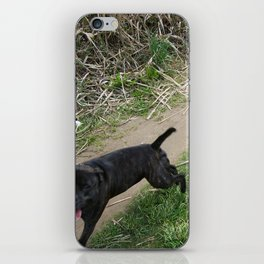 Dogs just want to have Fun iPhone Skin