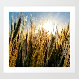 Wheat Glow Art Print