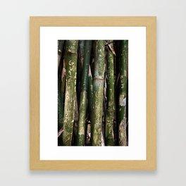 Bamboos in Maringá Framed Art Print