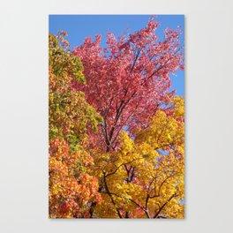 Tricolore Canvas Print