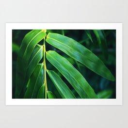 Bamboo Leaf Zen Poster II Art Print