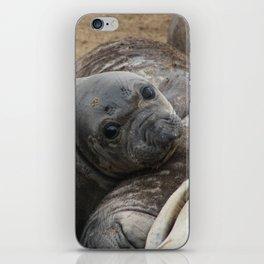 elephant seal pup iPhone Skin