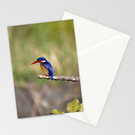 African Kingfisher Colorful Bird Perched on Branch Stationery Cards