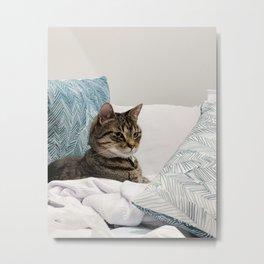Tabby among pillows Metal Print