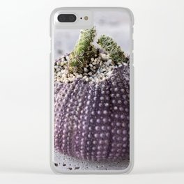 Cactus Planter in sea shell of purple sea urchin Clear iPhone Case