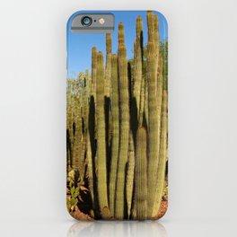 Organpipe Cactus iPhone Case