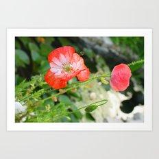 Sping Poppys Art Print