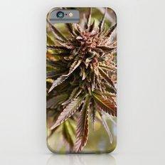 Sour Grape. iPhone 6s Slim Case