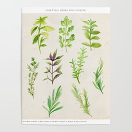 Watercolor Herbs Poster