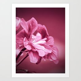 Ivy Geranium named Contessa Purple Bicolor Art Print