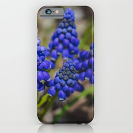Grape Hyacinth 5 iPhone Case